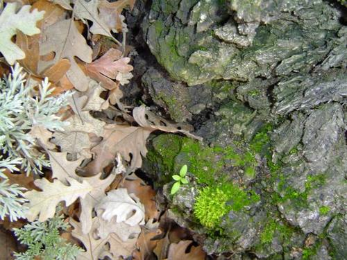 Leaves, Moss and Bark